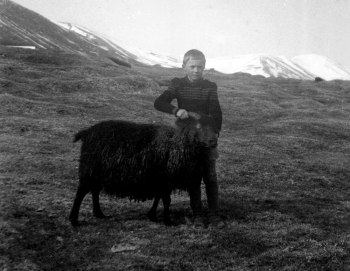 Þórir Jónsson með kind í túninu heima á Jarðbrú.