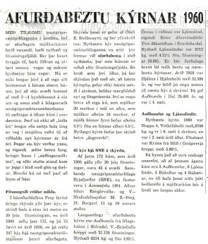 Ljómalind frá Másstöðum næstnythæsta kýr á Íslandi 1960.